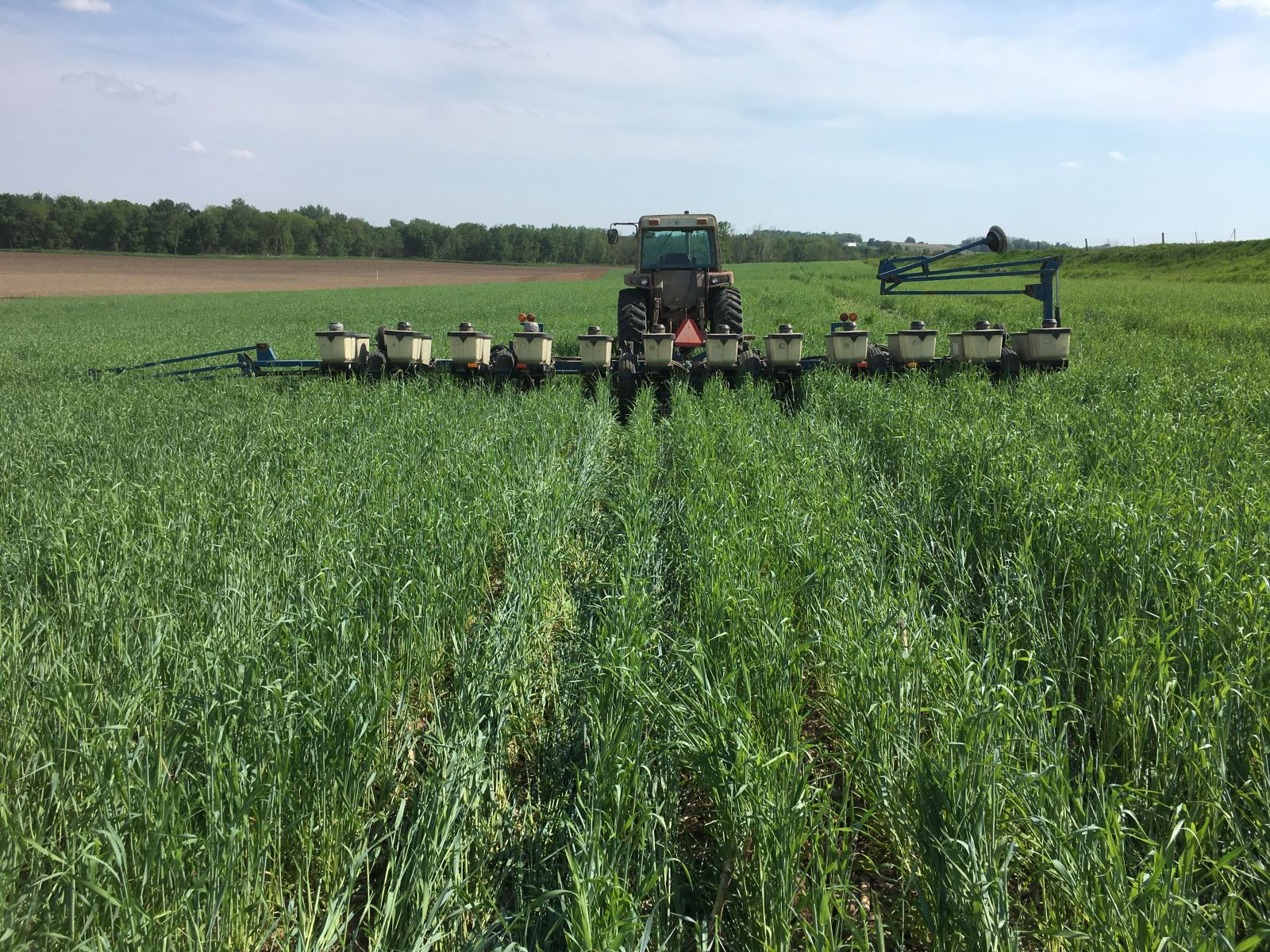 Cover Crops: The Answer to Our Water (and Farming) Woes