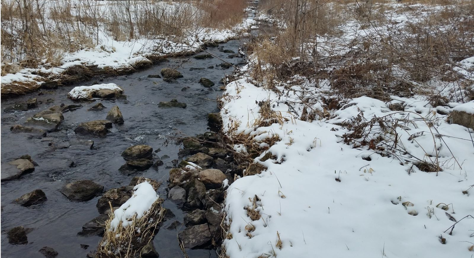 Dry Run Creek Winter
