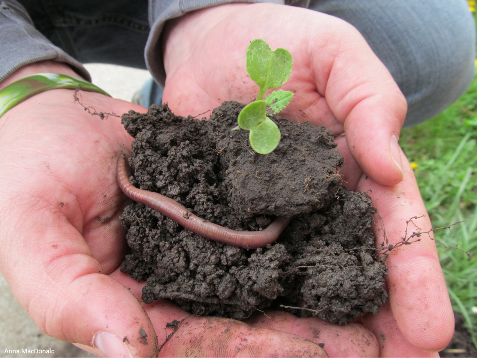 Healthy soils are full of life celebrating soil and water for Is soil living