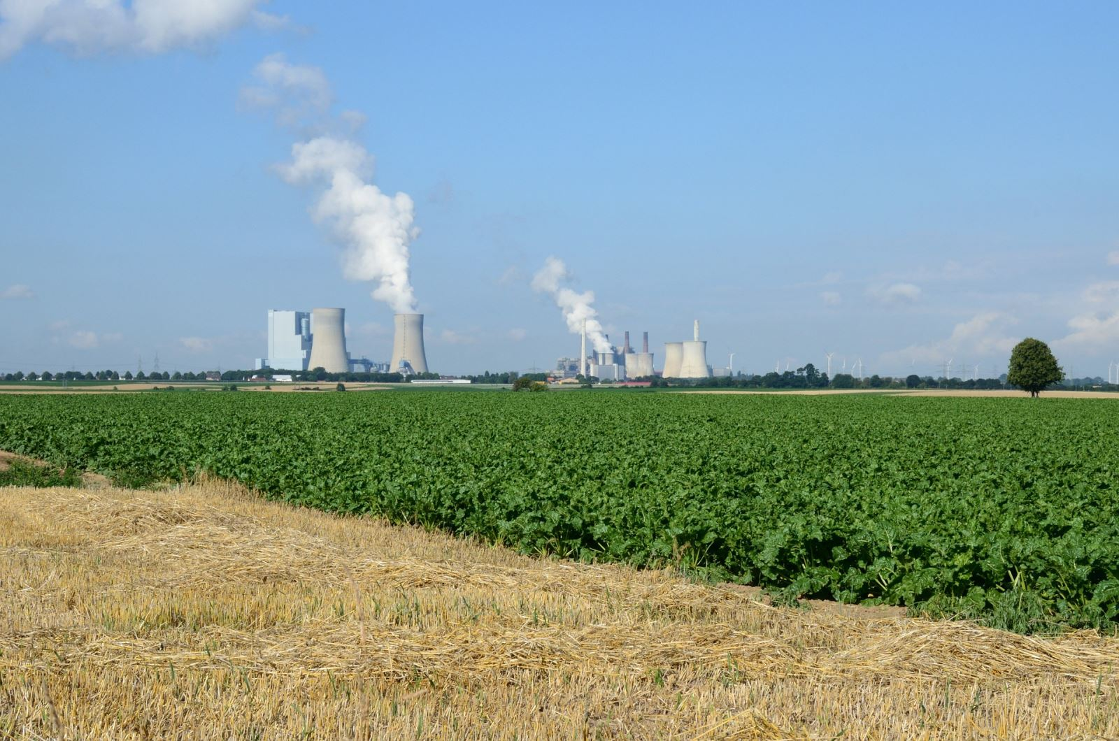Crops with coal plant in the distance